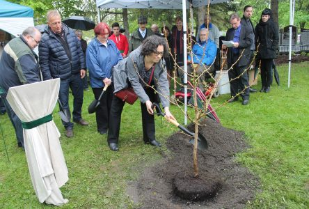 Organ donors ­celebrated through local tree planting