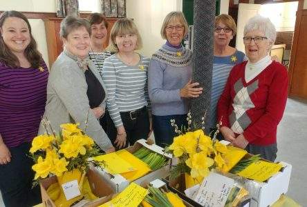 Another successful daffodil campaign
