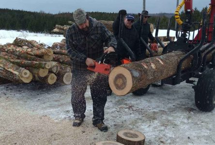 Brome County Fish and Game Club wood  cutting contest and trophy distribution