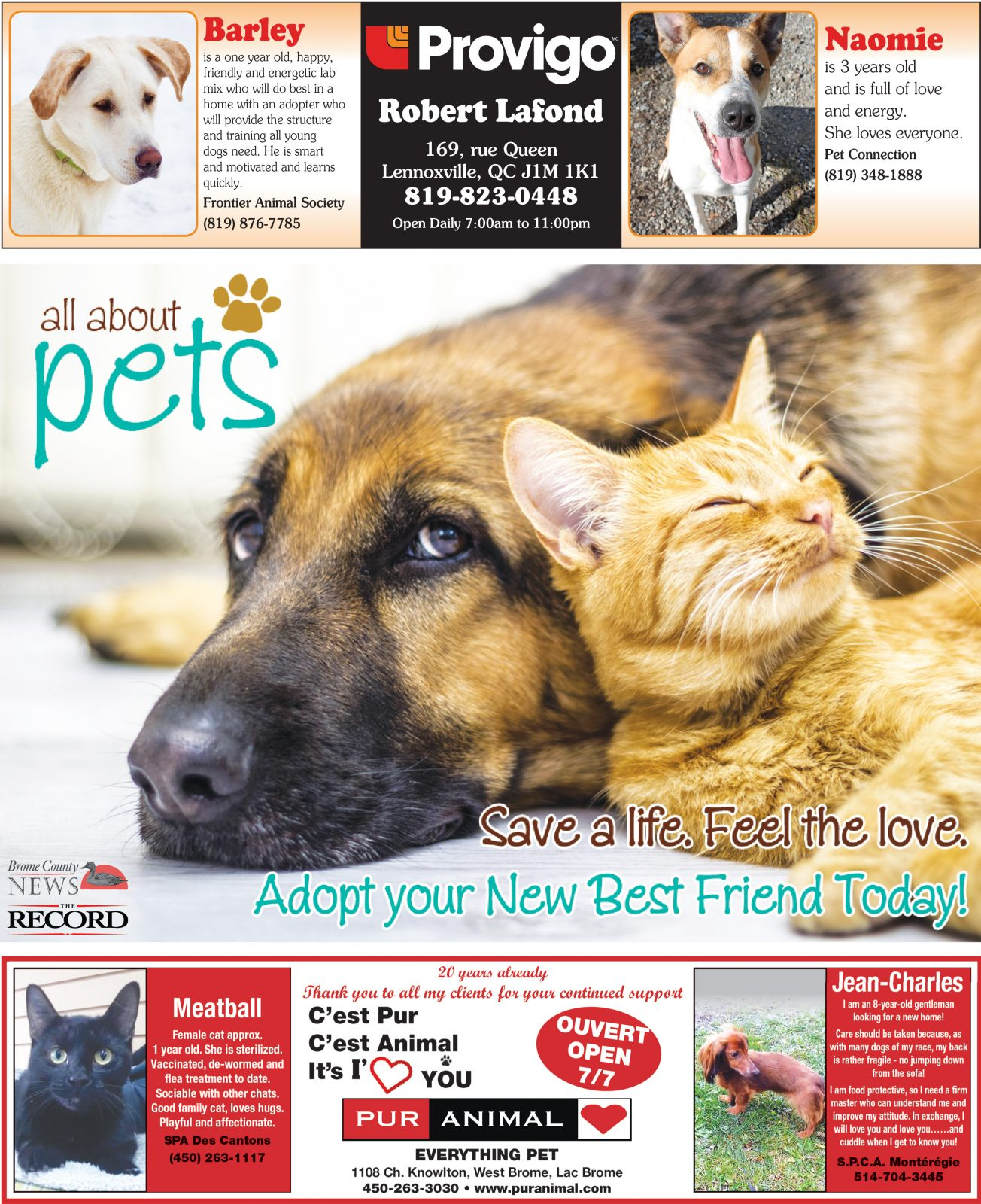 All About Pets – November 20, 2018