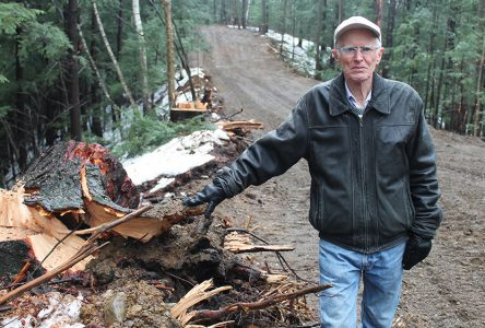 Bishop's  ski trail ­neighbours speak for the trees