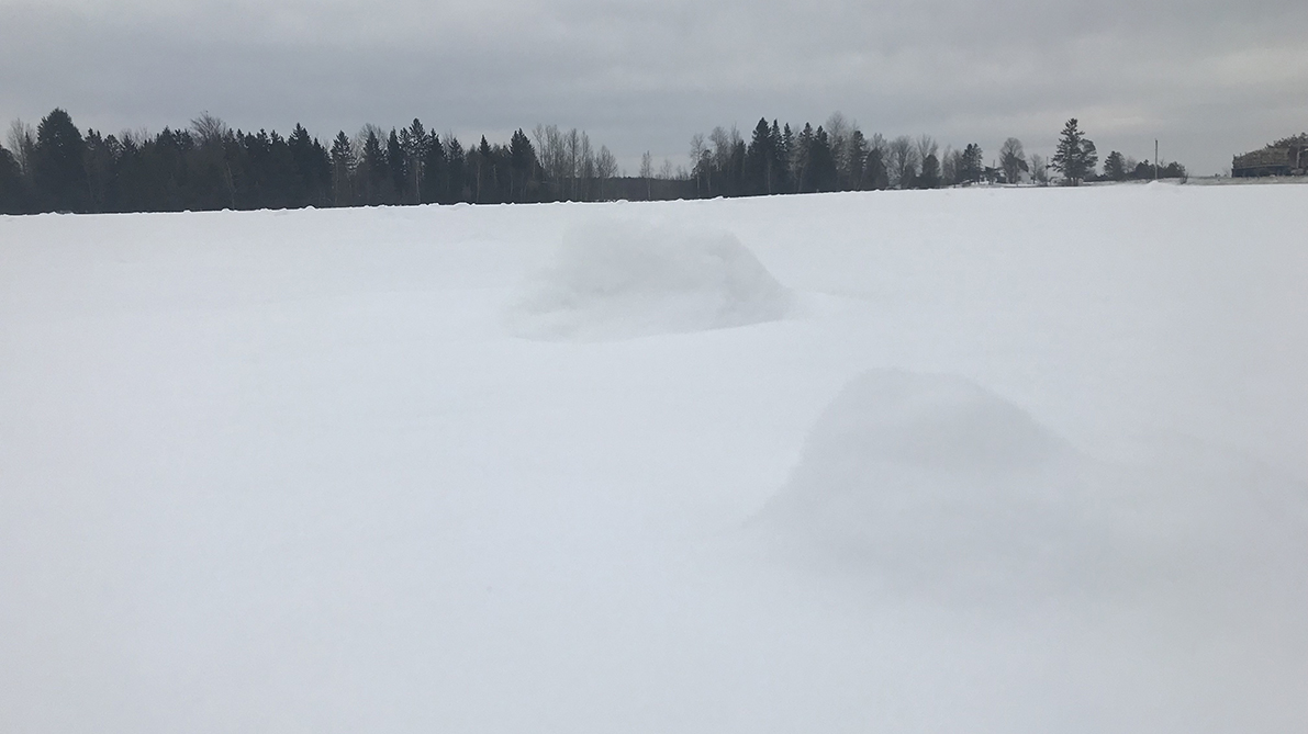Snow rollers spotted on the 143