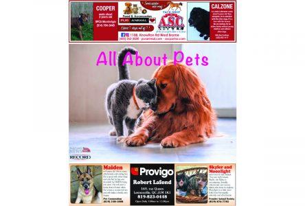 Brome County News – Nov. 12, 2019 edition