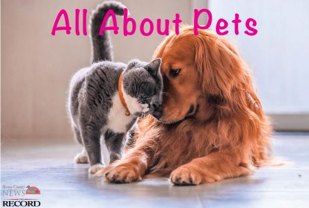 All About Pets – Special Supplement November 26, 2019