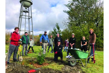 Over 500 trees planted in Waterville