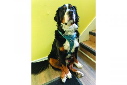 Dog owners advised to be on alert