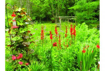 It's indoor seedlings season!