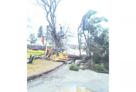 High winds whip up trouble in the Townships