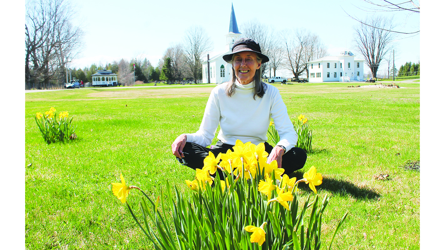 Checking in on the common daffodils