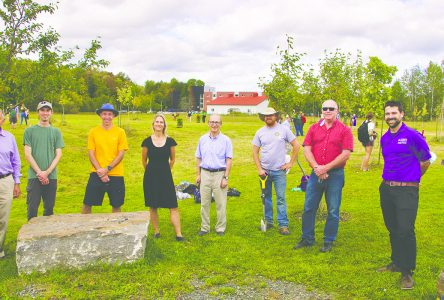 Bishop's begins tree planting project
